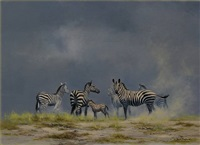 zebras by david shepherd