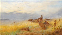 english partridge resting by archibald thorburn