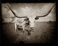 longhorn 3 by david michael kennedy