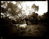 longhorn 14 by david michael kennedy
