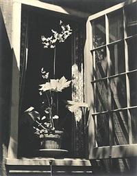 rex begonia in bloom by johan hagemeyer