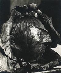 cabbage by johan hagemeyer