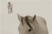 snow ponies, truchas, new mexico by jack spencer