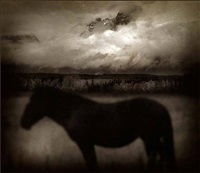 dark horse, wyoming by jack spencer