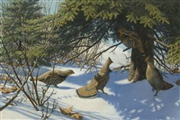 grouse and spruce tree by aiden lassell ripley