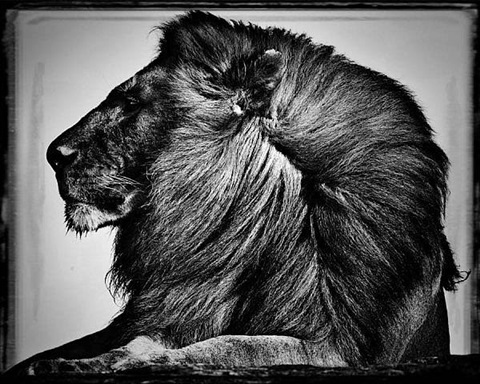 untitled by laurent baheux