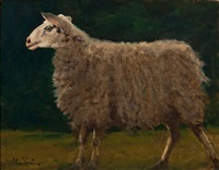 sheep study by anthony michael autorino