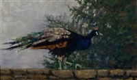peacock, minnepenason farm by anthony michael autorino