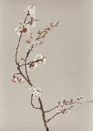 apple blossoms by fidelia bridges