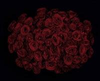 roses v by guido mocafico