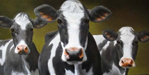 cows three by carolyn droge