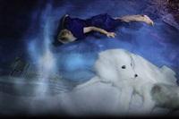 arctic fox by susanna majuri
