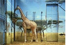 zoologischer gärten paris ii by candida höfer
