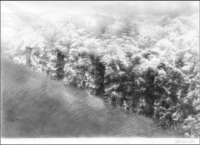 forest series by josefina robirosa