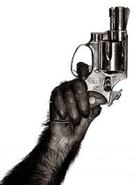 monkey with gun, new york city, 1992 by albert watson