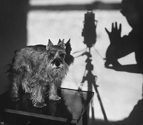 self portrait with staccato, new york by ilse bing