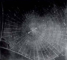 untitled (web 2) by vija celmins