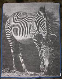 zebra by helen altman