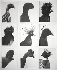oiseaux - vögel by jochen lempert