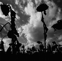 """untitled from the """"asor"""" series by graciela iturbide"""