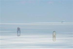 polar bears in etosha pan by kim sung nam