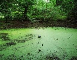 tenseless-5, swamp by hyung-geun park