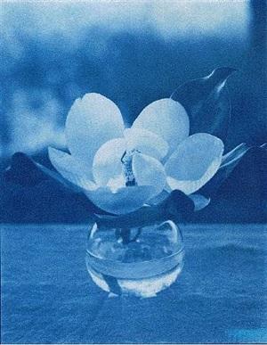 houston magnolia by john dugdale