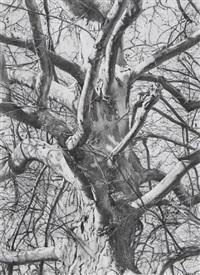 árbol iv by rafael cidoncha
