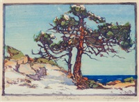 coast cedars by margaret jordan patterson