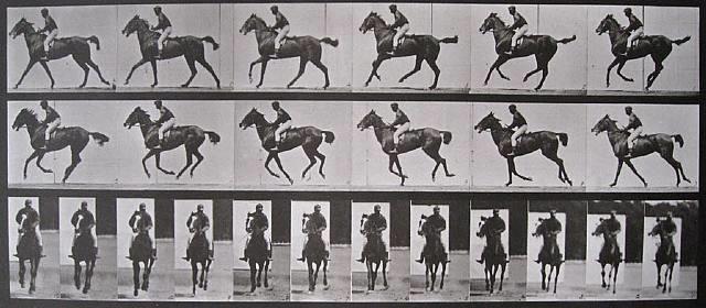 animal locomotion, plate 621, annie g., cantering, saddled by eadweard muybridge