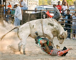 <!--12-->black cowboys: bull riding: rider iii, laday's arena, lovelady, texas by andrea robbins and max becher