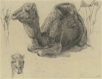 study of a camel by wilhelm friedrich kuhnert