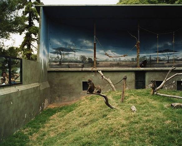 mandrils by richard billingham