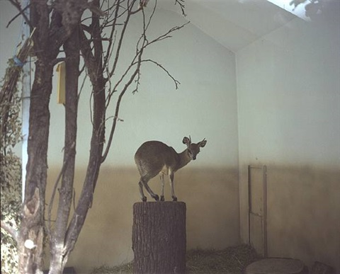 doe by richard billingham