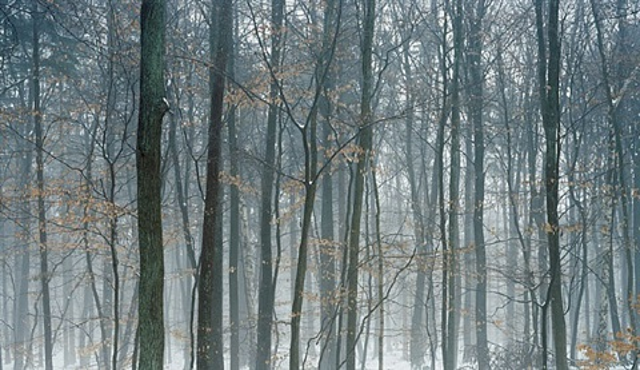 niederwald-2 by axel hütte