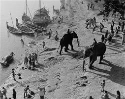 two elephants passing on gandak riverbank by marilyn bridges