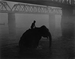 mahout riding elephant in gandak river at dawn by marilyn bridges