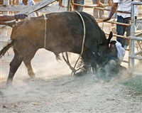 <!--19-->black cowboys: bull riding: rider iv, laday's arena, lovelady, texas by andrea robbins and max becher