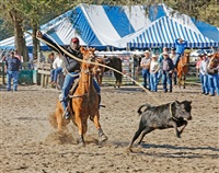 <!--19-->black cowboys: calf roping: tuffy perry, little pig foot rodeo, williston, florida by andrea robbins and max becher