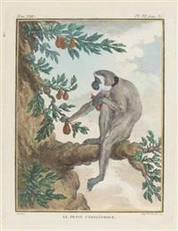 monkeys (6 works) by georges louis leclerc buffon