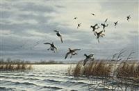 breaking in – bluebills by david a. maass