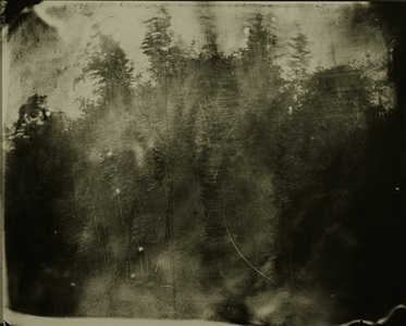 deep south #43 by sally mann
