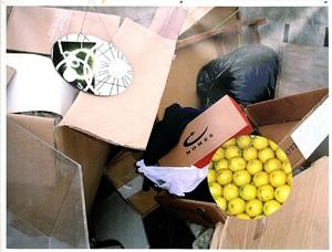 ohne titel (citronen) by ruedi bechtler
