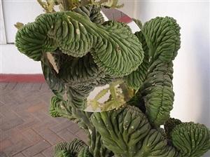 drehkreis (kaktus) by ruedi bechtler
