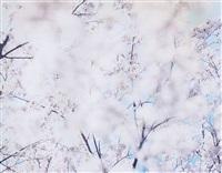 sakura, 07, 4-56 by risaku suzuki