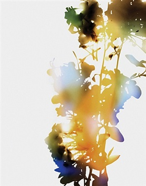 001, a+7 (from flowers) by james welling