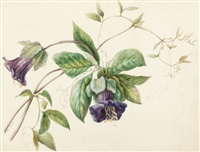 botanical study by emilie-anna reinhart