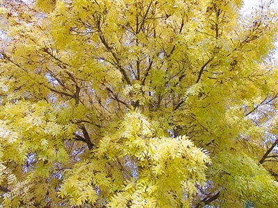 tree by eva koch