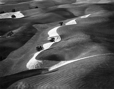 eight trees on a hill, paso robles, california by william garnett