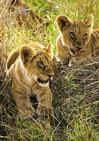 a rest from play by tony karpinski